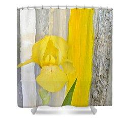 First Yellow Iris Shower Curtain by Marsha Heiken