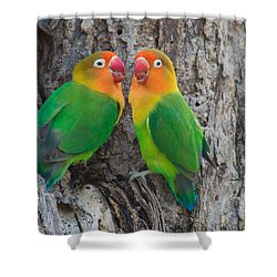 Fischers Lovebird Agapornis Fischeri Shower Curtain by Panoramic Images