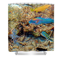Fish Shower Curtain by Betty Buller Whitehead