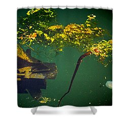 Fish Eye View Shower Curtain by Dale Stillman