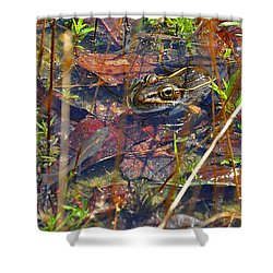 Shower Curtain featuring the photograph Fish Faces Frog by Al Powell Photography USA