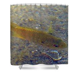 Fish Sandy Bottom Shower Curtain