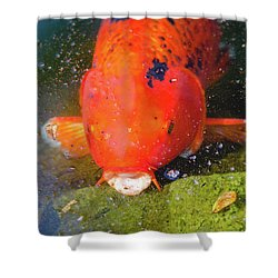 Shower Curtain featuring the photograph Fish Surprise by Raphael Lopez