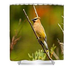 Fishercap Cedar Waxwing Shower Curtain by Adam Jewell