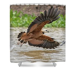Fishing Hawk Shower Curtain by Wade Aiken
