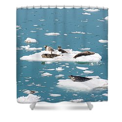 Five Habor Seals On Ice Flows Shower Curtain by Allan Levin
