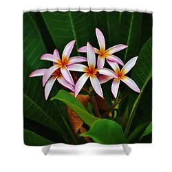 Five Of A Kind Shower Curtain by Craig Wood