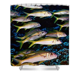 Fla-150811-nd800e-26035-color Shower Curtain