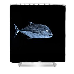 Fla-150811-nd800e-26052-bw-blue Shower Curtain