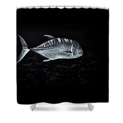 Fla-150811-nd800e-26063-bw-selenium Shower Curtain