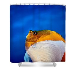 Fla-150811-nd800e-26086-color Shower Curtain
