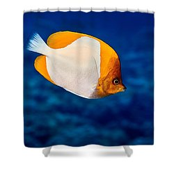 Fla-150811-nd800e-26087-color Shower Curtain