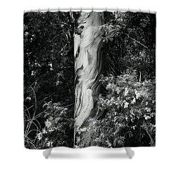 Fla-150523-nd800e-24853-bw-green Shower Curtain