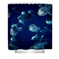 Fla-150811-nd800e-26096-color Shower Curtain