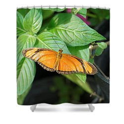 Shower Curtain featuring the photograph Flambeau Butterfly by Paul Gulliver