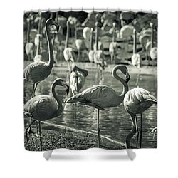 Flamboyance Of Flamingos Shower Curtain