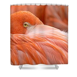 Flamboyant Flamingo Shower Curtain
