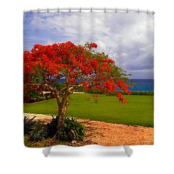 Flamboyant Tree In Grand Cayman Shower Curtain by Marie Hicks