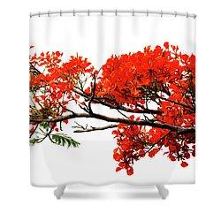 Flamboyant Shower Curtain
