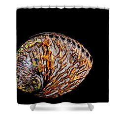 Shower Curtain featuring the photograph Flame Abalone by Rikk Flohr