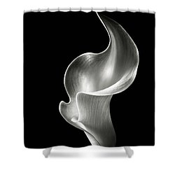 Flame Calla Lily In Black And White Shower Curtain