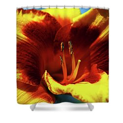 Flame Daylily 1238 H_2 Shower Curtain