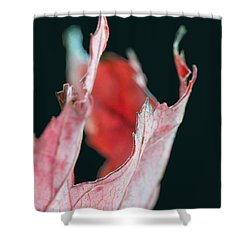 Flame Shower Curtain