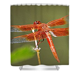 Shower Curtain featuring the photograph Flame Skimmer by AJ Schibig