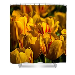 Flame Tulips Shower Curtain