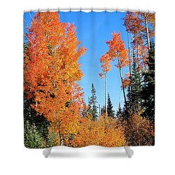 Flaming Autumn Trees In Dixie National Forest Utah Shower Curtain