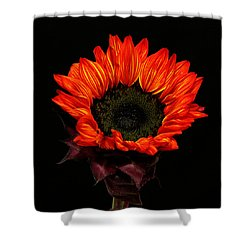 Shower Curtain featuring the photograph Flaming Flower by Judy Vincent