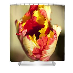 Flaming Parrot Shower Curtain