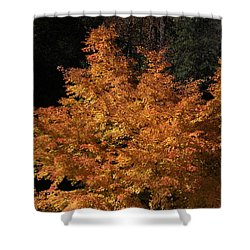 Flaming Tree Brush Shower Curtain by Deborah  Crew-Johnson