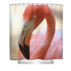 Flamingo 2 Shower Curtain by Elizabeth Budd