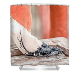 Flamingo At Sea World In Orlando Florida Shower Curtain