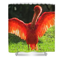 Flamingo Backlit Shower Curtain