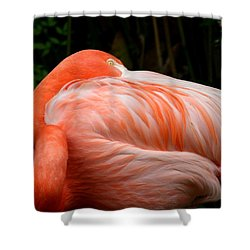 Shower Curtain featuring the photograph Flaming O by Cathy Harper