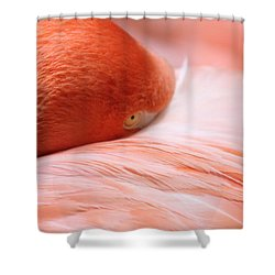 Flamingo Shower Curtain by Elizabeth Budd