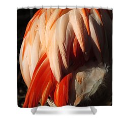 Flamingo Feathers Shower Curtain