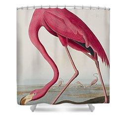 Flamingo Shower Curtain by John James Audubon