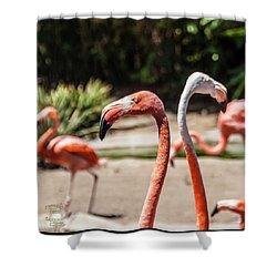 Flamingo Pair Shower Curtain