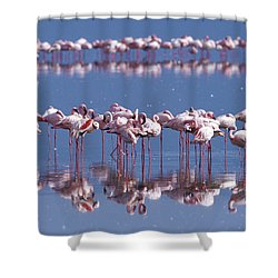 Flamingo Reflection - Lake Nakuru Shower Curtain by Sandra Bronstein