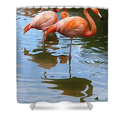 Shower Curtain featuring the photograph Flamingo Reflections by Margaret Bobb