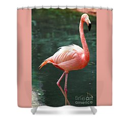 Flamingo Single Flamingle Shower Curtain