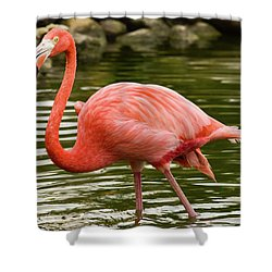 Flamingo Wades Shower Curtain