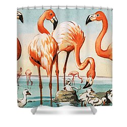 Flamingoes Shower Curtain by English School