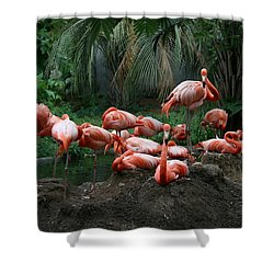 Shower Curtain featuring the photograph Flamingos by Cathy Harper