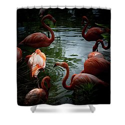 Shower Curtain featuring the photograph Flamingos by Eric Christopher Jackson