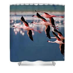 Flamingos In Flight-signed Shower Curtain