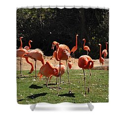 Shower Curtain featuring the photograph Flamingos by John Black
